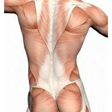 back & spine anatomy explained., Human Body