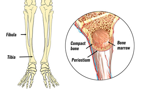 shin splints anatomy