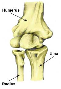 Elbow Anatomy | Bones, joints and ligaments explained