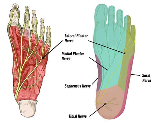 Lateral plantar nerve
