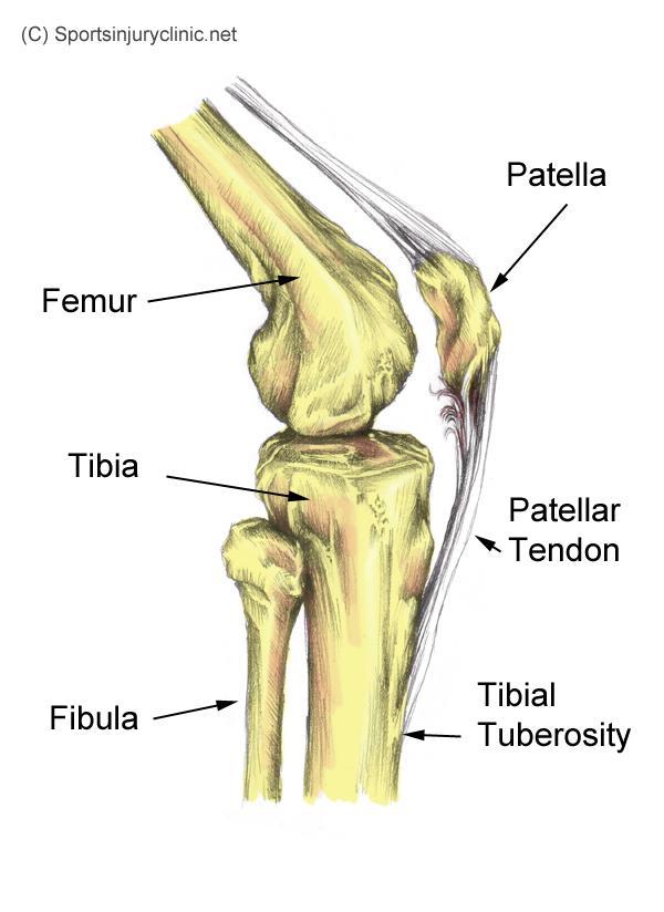 Jumpers Knee Treatment Rehabilitation