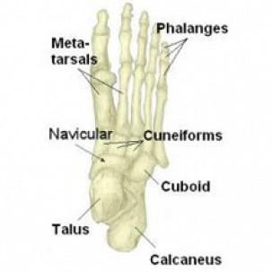 Tarsal Fracture