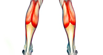 Calf injuries including calf strain