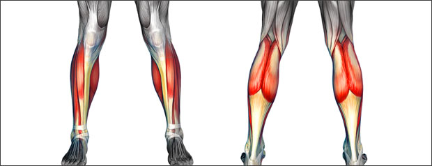 Shin and calf injuries in sport