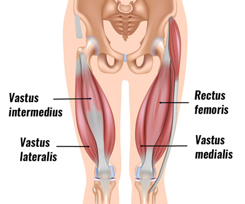 Thigh Strain Quadriceps Strain Treatment Exercises