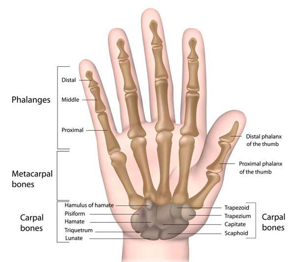 Sprained Thumb Symptoms Treatment