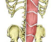 Abdominal Muscle Strain