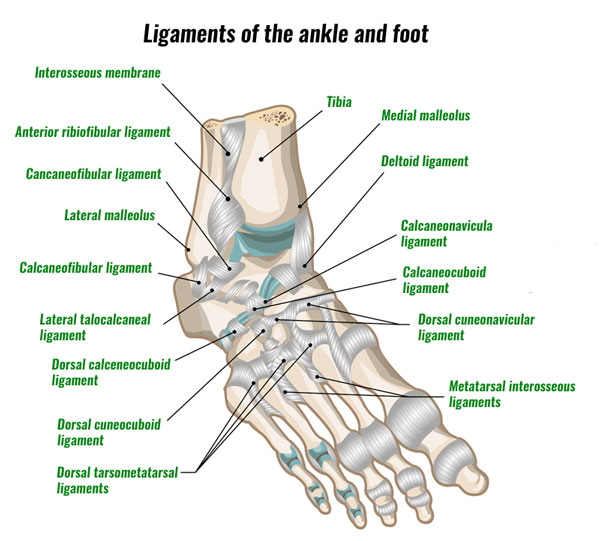 Foot ligaments - midtarsal joint sprain