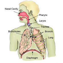 Fractured Larynx