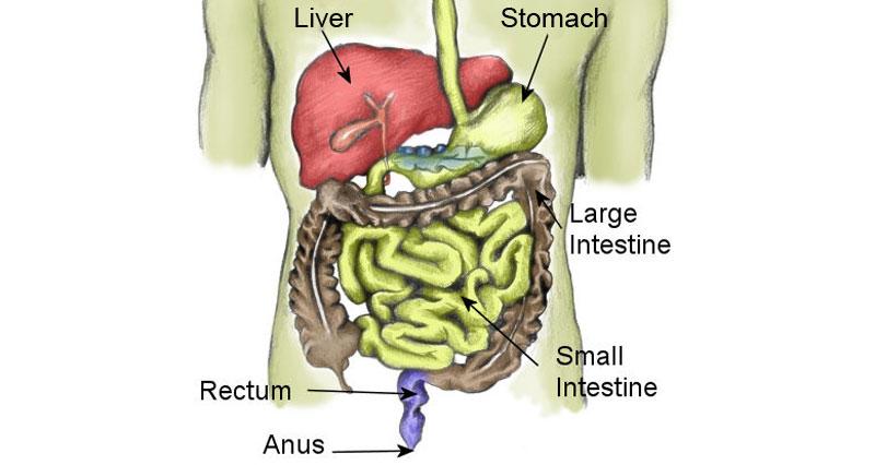 Gastrointestinal symptoms