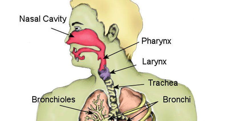 Fractured Larynx Symptoms Causes Treatment