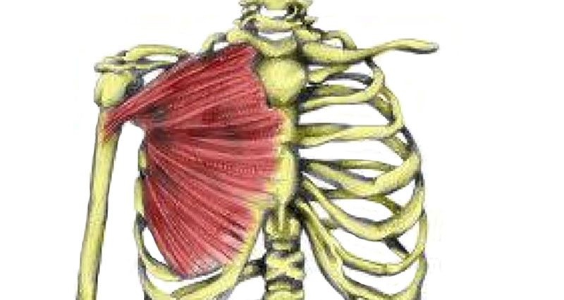 Pec major muscle strain