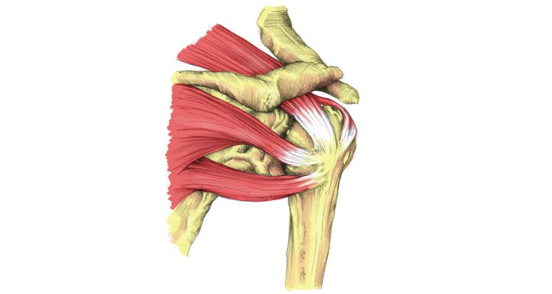 how do you know if you tore your rotator cuff