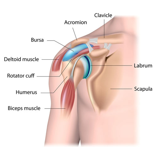 Dislocated shoulder - other structures in the joint