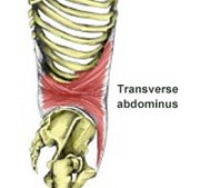 The Core Muscles & Core Stability