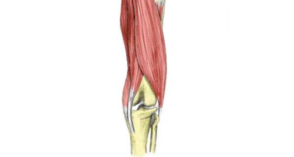 Hamstring tendon strain