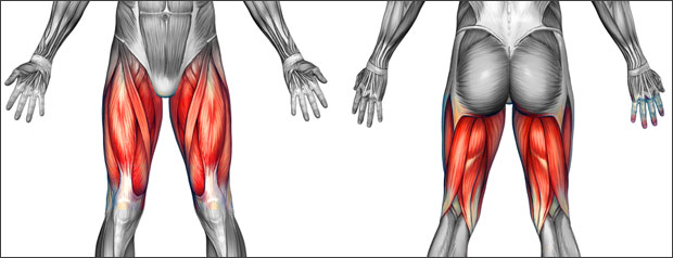 Thigh pain & thigh injuries