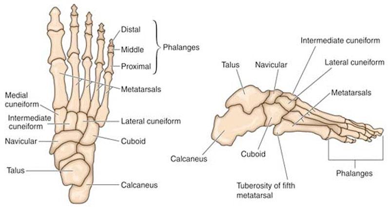 Foot stress frqacture