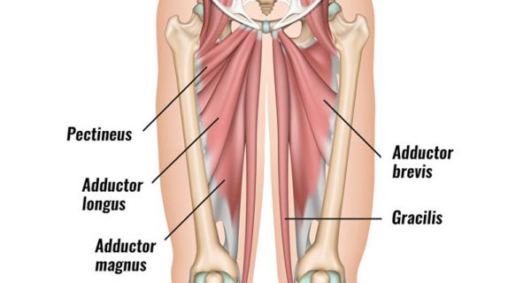 Groin strain muscles