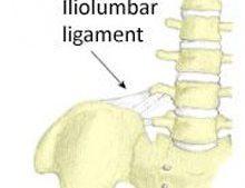 Lower Back Injuries