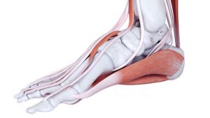 Pain on the inside of the foot