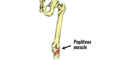 Popliteus pain at the back of the knee