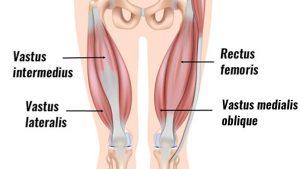 Vastus medialis oblique muscle
