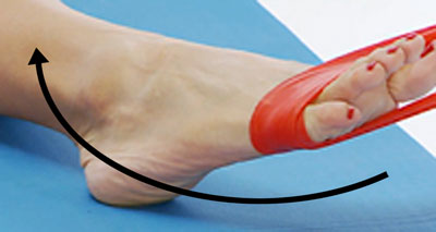 Ankle eversion against band